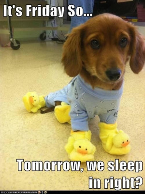 Attack Of The Funny Animal Pictures – 37 Pics