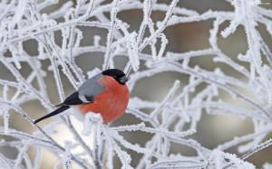 冬天里的动物图片