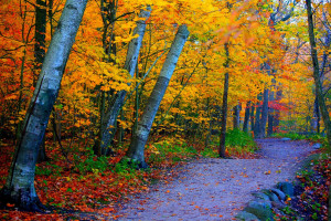 ... Park pathway in Southern Milwaukee, Wisconsin during an autumn morning