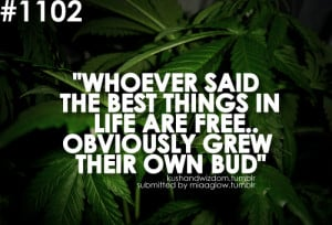 Weed Quotes Funny