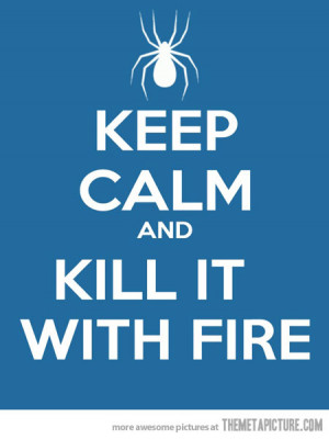 Funny photos funny spider kill it with fire