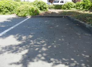 25000-bees-died-in-this-parking-lot-because-landscapers-allegedly ...