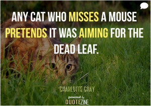 Cat Quotes: 25 Sayings Only Cat Lovers will Understand