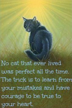 Warrior Cats Quotes And Sayings Quotesgram