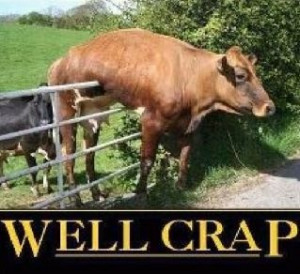 Well, crap! We made it. It's Friday!!