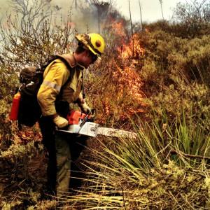 wildland firefighter working