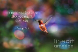 Inspirational Hummingbird Quotes