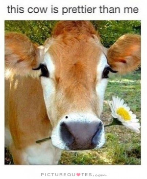 This cow is prettier than me Picture Quote #1