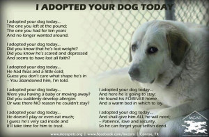 Animal Rescue, Dogs Today, Dogs Animal, Adoption A Dogs, Pet, So True ...