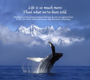 Whale Mountains Pamela Quote