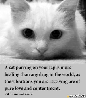 Cat Purring On Your Lap Is More Healing Than Any Drug In The World,