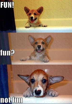 Funny dog pictures, dog picture with caption, funny dog