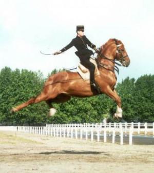 ... , Le Cadre Noir de Saumur et l'Ecole Royale Andalouse d'Art Equestre