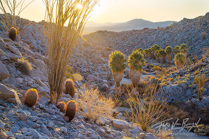 Desert Oasis : Prints Available