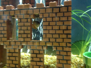 Super Mario Bros. aquarium DIY project is one you'll definitely want ...