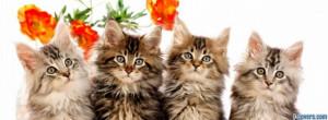 four kittens facebook cover for timeline