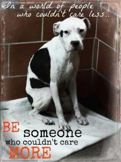 END Dog Fighting & STOP Animal Abuse