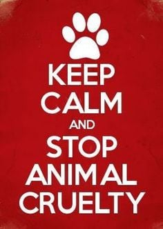 keep calm and stop animal cruelty more endangered animal quotes ...
