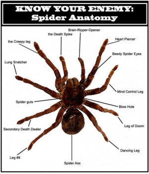 spider anatomy The Anatomy of Spider
