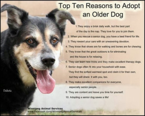 Adopt a senior pet PLUS Beagle Freedom Project saves 3 seniors