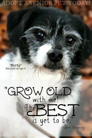 ... pet, grey hair, grey muzzle, cute, sweet, quote, adopt, rescue, mutt