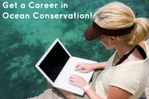 Tips to Finding Jobs for Marine Biology in Conservation ...