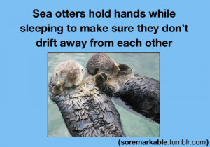 animals cute fact facts otters sea otters