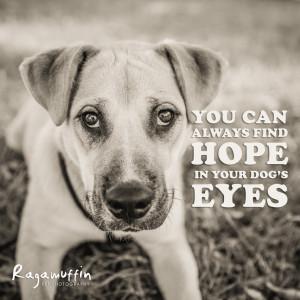 dog-quote-hope-eyes.jpg