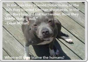 Quotes About Pit Bulls Fridge magnet pit bull dog
