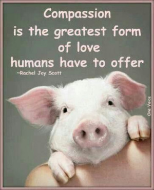 Quote about compassion, with a pig :)