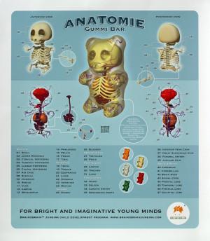 brainobrain_gummi_bear_anatomy.jpg