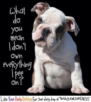 Bulldog funny quote