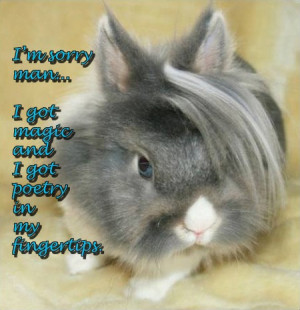 Cute Bunny Sayings Quotes