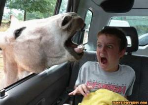 ... .gotsmile.net/images/2011/05/02/funny-horse-attack_130434706042.jpg