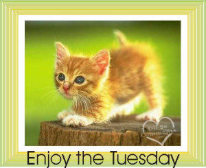 Tuesday Wishes Scraps, Pictures, Comments for Orkut, MySpace