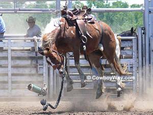 Bronc Riding Quotes Quotesgram