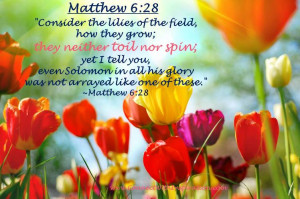 Consider The Lilies Of The Field, How They Grow; They Neither Toil Nor ...
