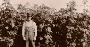 Top Marijuana Quotes Credited