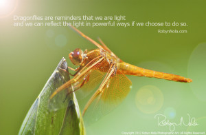 Dragonfly quotes wallpapers
