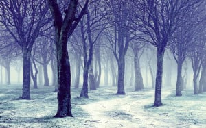 Nature Snowy Winter Forest Trees | 1440 x 900 | Download | Close
