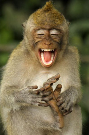 Funny Animals - Monkey Laughing