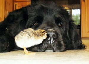 Curious little chick. Dog doesnt seem to bothered by the little bird.