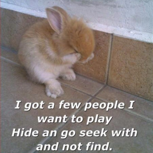 cute bunny sayings funny 3 cute bunny sayings funny 4