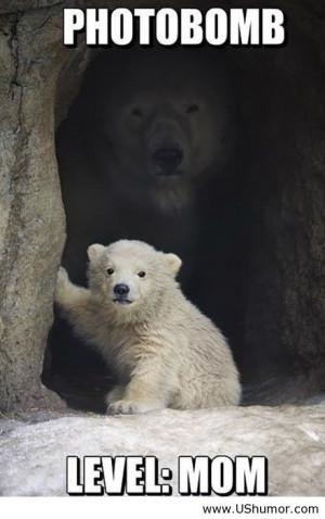 Polar bear photobomb level mom US Humor - Funny pictures, Quotes, Pics ...