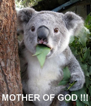 VH funny-koala-picture-mother-fo-god