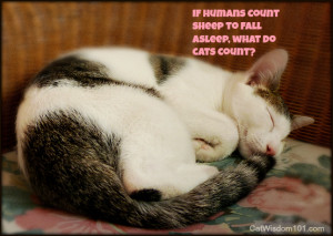 Cute Cats And Kittens With Quotes