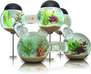 Funny photos funny Labyrinth Aquarium design