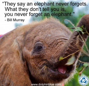 ... elephants killed annually, equating to one elephant dying every 15