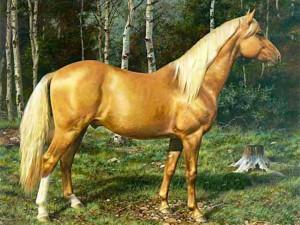 Golden Palomino Horse Wallpaper