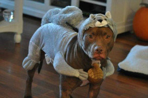 Forget Everything You Think You Know About Pit Bulls – 19 Pics